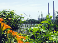 WIldlife habitat at Monroe Power Plant