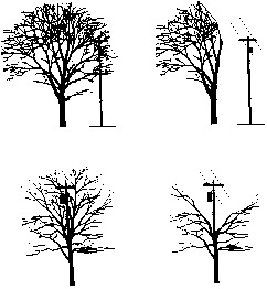 tree trim illustration